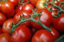 Томат Джина - описание сорта с фото, характеристика, урожайность Отзывы