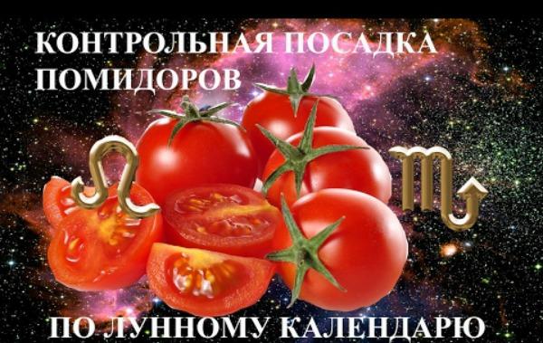На какой Луне и в каком знаке Зодиака нужно сажать томаты