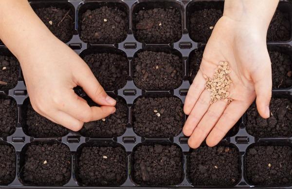 Когда необходимо сеять семена?