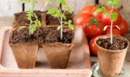 Когда сажать помидоры на рассаду в 2019 году в Подмосковье, в Сибири, в Ленинградской области, на Урале, по лунному календарю
