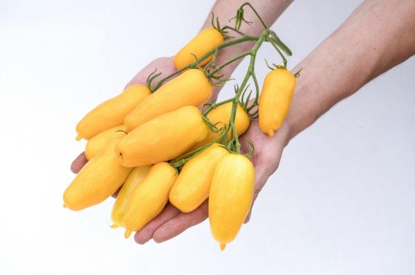 Отзывы садоводов, кто сажал сорт Банановые ноги