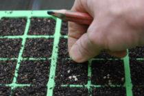 Благоприятные дни для посева томатов на рассаду в 2019 году по Лунному календарю, по регионам