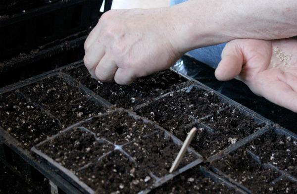 Благоприятные условия для посева, роста и развития томатов