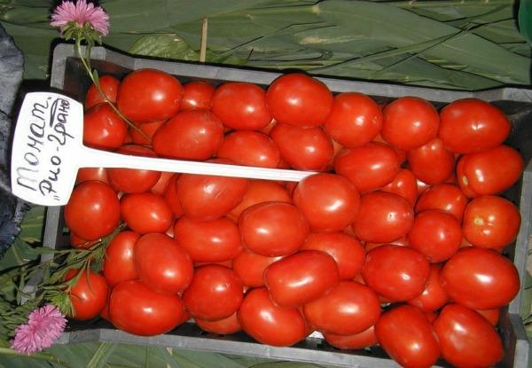 Лучшие засолочные томаты