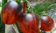 Помидор Гаргамель F1 - описание сорта с фото, характеристика, урожайность Отзывы кто сажал