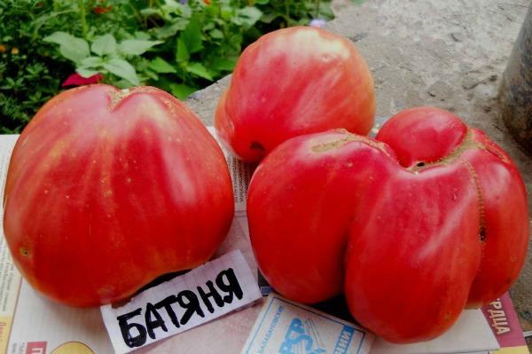 Батяня томат отзывы