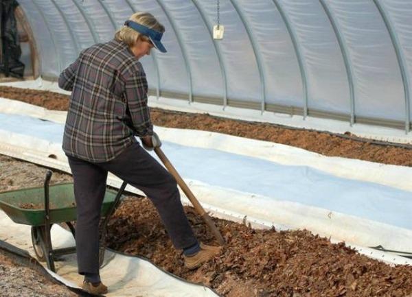 Как подготовить землю для посадки томатов