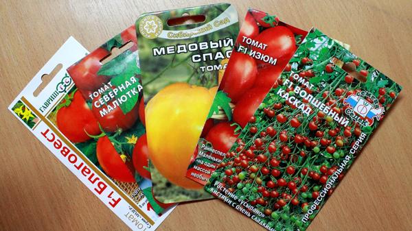 Особенности выбора семян томатов для Подмосковья