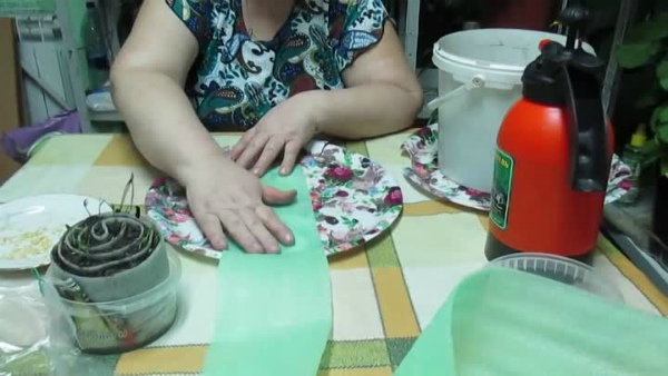 Как правильно посадить помидоры в «улитку»