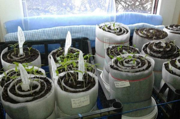 Какие растения ещё можно сажать в «улитки»