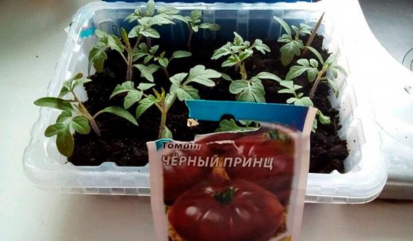 Особенности выращивания