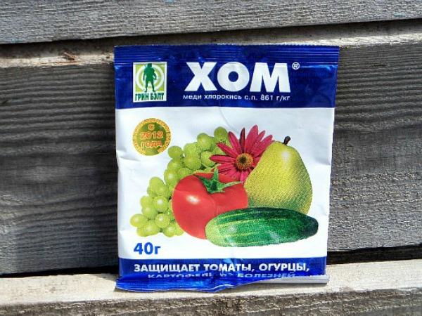 Чем обрабатывать помидоры от фитофторы