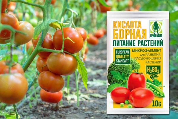 Для чего подкармливать помидоры борной кислотой?