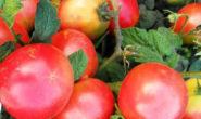 Помидор Демидов - описание сорта с фото, характеристика Урожайность Отзывы, кто сажал Видео