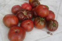 Томат Арбузный - описание сорта с фото, характеристика, урожайность Отзывы, кто сажал Видео