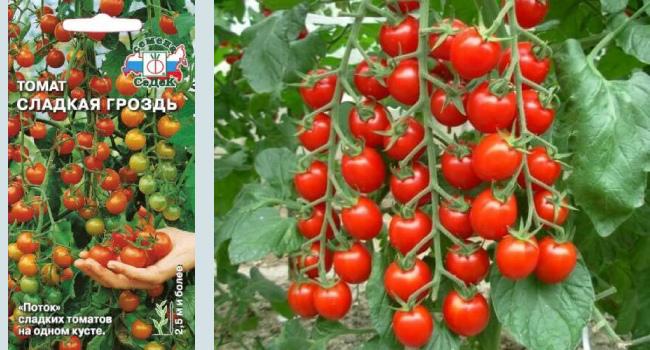 Характеристика и описание сорта Сладкая гроздь с фото