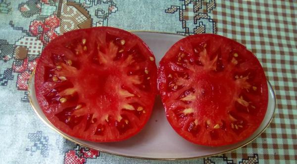 Сорт помидор Сибирские шаньги