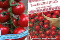 Помидор Сладкая гроздь - описание сорта с фото, характеристика Урожайность Отзывы, кто сажал Видео