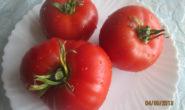 Помидор Алтайский шедевр - описание сорта с фото, характеристика, урожайность Отзывы, кто сажал Видео